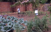 The new Ndi Moyo Demonstration Garden Image