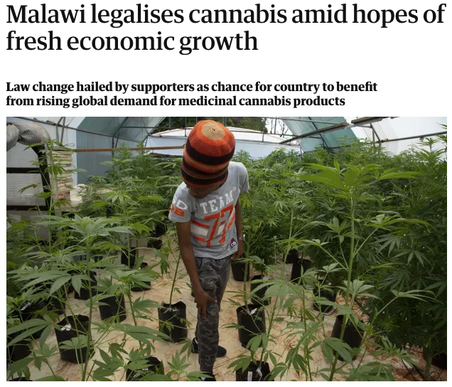 Malawi decriminalises cannabis from The Guardian newspaper.